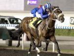 soft falling rain_UAE guineas trial - 17-01-2013