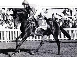 Bush Telegraph, Race horse