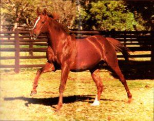 Northfields, horse