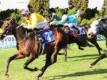 Potala Palace wins the Joburg Spring Challenge