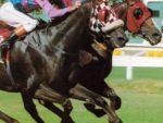 1994 Gr1 J&B Met - PAS DE QUOI - finish