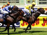 Capetown Noir wins the Gr1 Cape Derby at Kenilworth 13-02-02