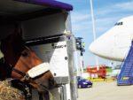 Horse Export