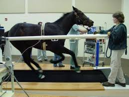 Horse on treadmill