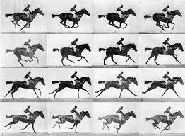 Edward Muybridge Gallop Phase