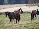 2014 Summerhill Stallion Day