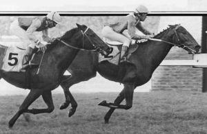 Bush Telegraph wins the 1987 Rupert Ellis Brown