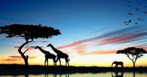 Kenya beauty_compressed