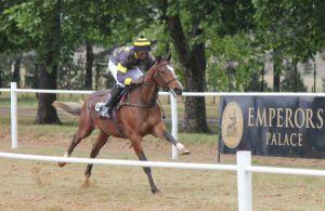 Yellow Star Ready To Run gallops