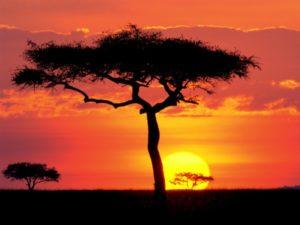 sun-in-savannah_compressed