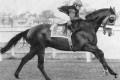 The Iron Horse - Sentinel