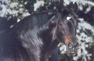 Elliodor (Lyphard-Ellida)