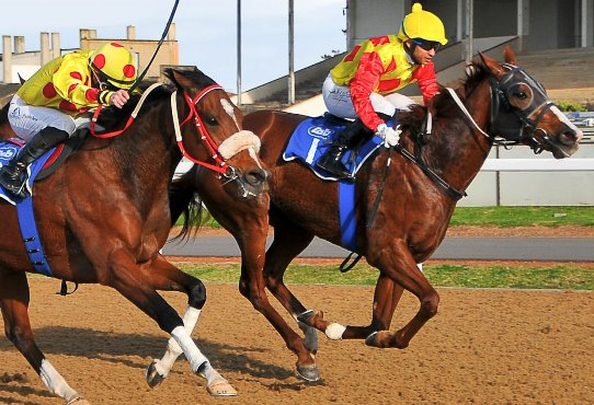 Supreme Sunset wins L East Cape Paddock Stakes