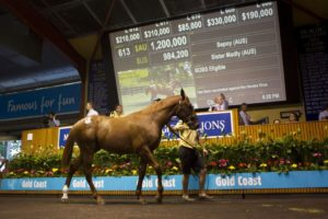 2015 Magic Millions Gold Coast Yearling Sale Lot 613 (Sepoy - Sister Madly)