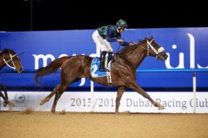 Cool Cowboy wins Terrace Brunch At Meydan Racecourse Handicap (photo: Andrew Watkins)