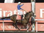 2012 Dubai World Cup - Monterosso (photo: Dubai Racing Club)