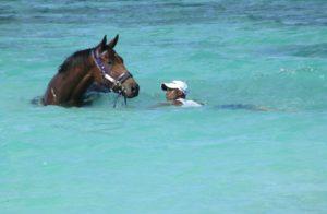 Smart Call enjoying the facilities in Mauritius (photo: Alec Laird Racing)