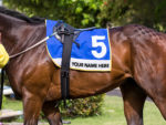 The curious case of the saddle cloth