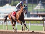 California Chrome is an easy winner in the Awesome Again Stakes (photo: Santa Anita)