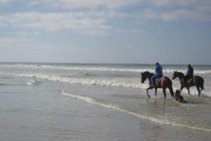 Run For It, Snaith Racing, Muizenburg Beach