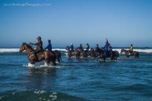 Racehorse string on Melkbos beach (photo: Ian van Romburgh)
