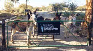 Karoo Donkey Sanctuary (photo: supplied)