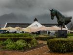Drakenstein Stud Farm stallion day (photo: hamishNIVENPhotography)