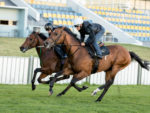 Gold Standard gallops with Quickfire (photo: hamishNIVENPhotography)