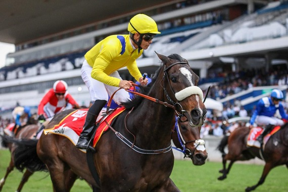 Durban july runners and betting trends 365 mobile betting in uganda
